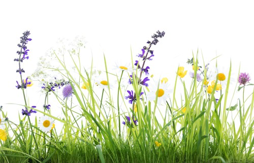 Blumen in ihrer Wildform