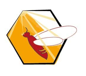 Biene als Frühaufsteherin